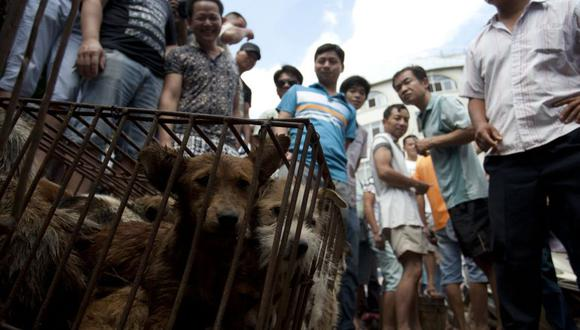 Los vendedores esperan que los clientes compren perros en jaulas en un mercado en Yulin, en la provincia de Guangxi. (Foto: STR / AFP).