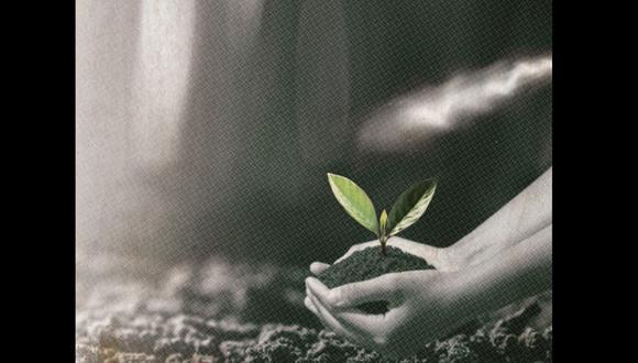 """""""Las personas son como las plantas: crecen buscando la luz"""". Hope Jahren. Lee la columna de Lorena Salmón. (Ilustración: Kelly Villarreal / Somos)"""