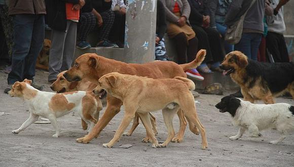 Proyecto del Congreso plantea que el Estado se encargue de la esterilización de las mascotas | Foto: GEC