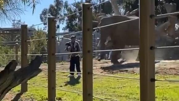 Un hombre es arrestado por colarse con su hija en el hábitat de los elefantes de un zoológico de Estados Unidos. (Foto: @ReporterCassie / Twitter)