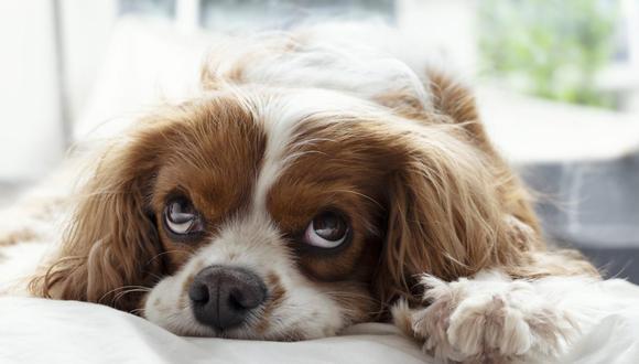 Si lo acostumbras a que duerma contigo, será difícil que se eche solo en su cama. (Foto: PicsbyFran / Pixabay)