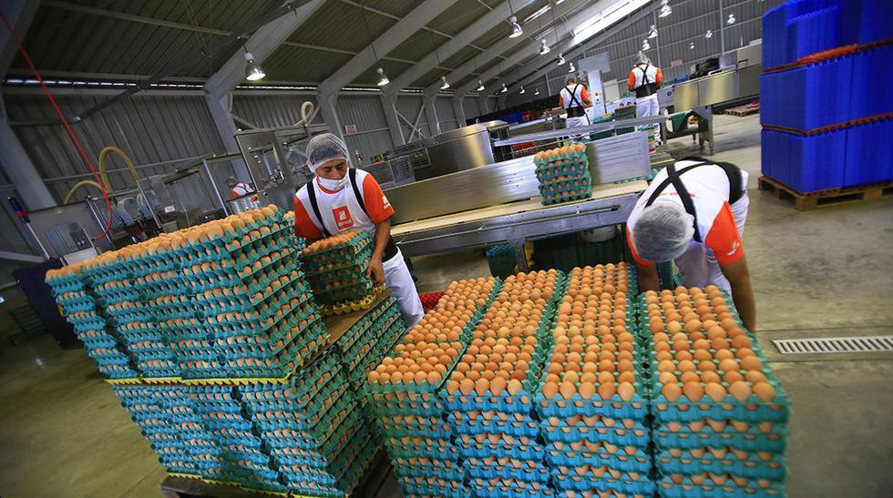 Avivel: la empresa que usa la tecnología para producir huevos - 5
