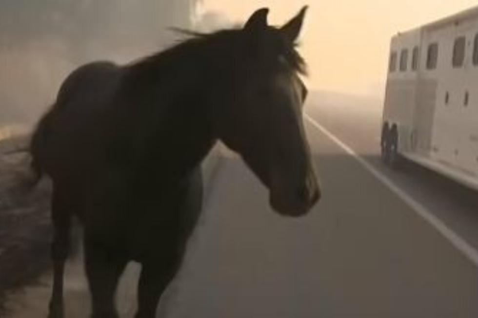 Un caballo arriesgó su vida para poner a buen recaudo a otros equinos de un incendio. (Foto: CBS Los Angeles en YouTube)