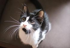 El lamentable final de un gato tras intentar cazar a una mosca
