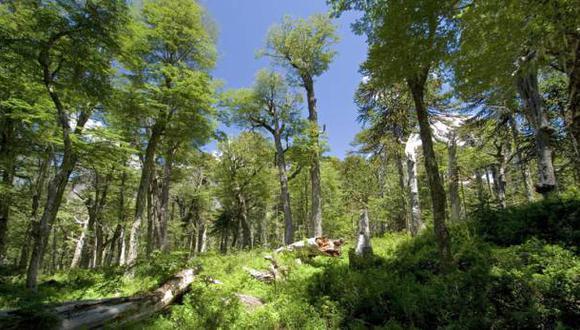 Inventario forestal: buscan cooperación de gobiernos regionales