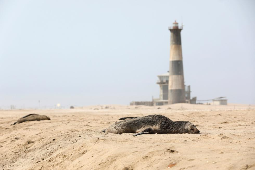 Una foca muerta yace en una playa cerca de Pelican Point, Namibia, el 23 de octubre de 2020. (REUTERS/Karin Coetzee).