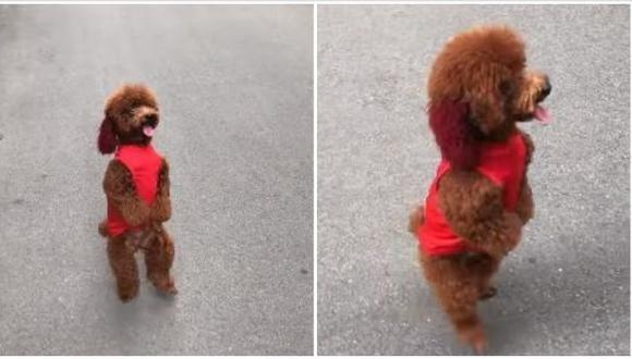 Como si se tratase de un acto circense, este pequeño perro corre son singular estilo y sin necesitar sus patas delanteras. El video fue publicado en YouTube y se hizo viral. (Foto: captura de video)