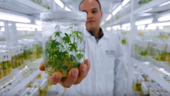 Perú será el segundo país con mayor conservación de recursos genéticos del mundo