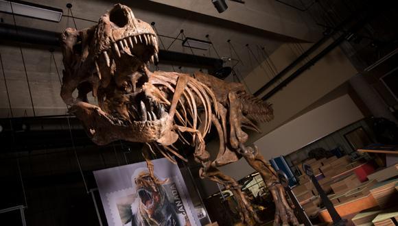 Es el depredador terrestre más grande conocido por la ciencia, según sus descubridores. (Foto: AFP/Amanda Kelley)