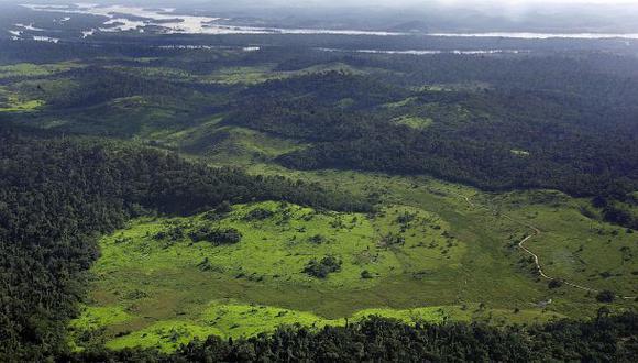 FAO espera que hallazgo de más árboles ayude a países pobres
