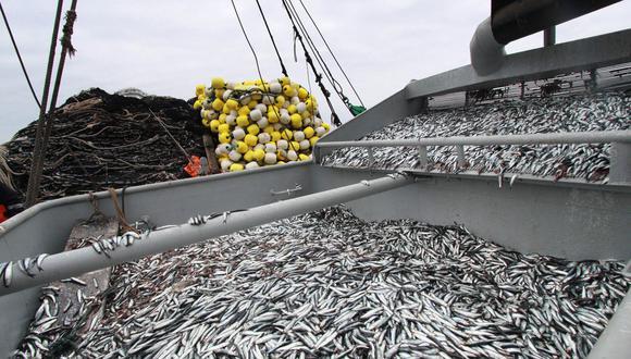 Asimismo, IMARPE informó que se encontró una biomasa total de 10.1 millones de TM de anchoveta en el mar. (Foto: GEC)