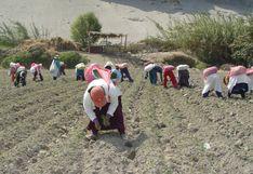 Minagri planea implementar mercados itinerantes para impulsar ventas de productores agrícolas