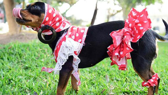 Si bien hay perros que disfrutan mucho el disfrazarse, también hay perros que sienten mucha incomodidad con la ropa. Lo importante es conocer a tu mascota. (Foto: archivo El Comercio)