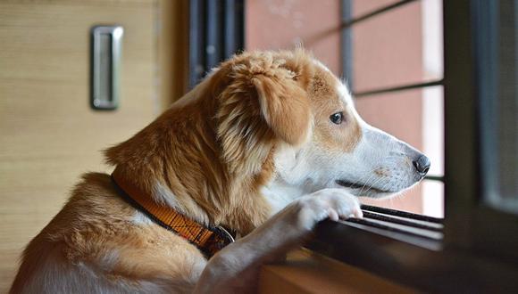 Salir a pasear es importante para que el perro afiance el vínculo con su dueño, pero quedarse en casa le puede generar tristeza. (Foto: Amit Karkare / Pixabay)