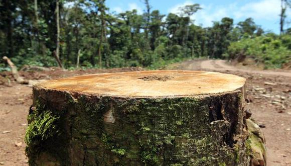 Deforestación: Perú alcanzó niveles máximos en últimos 13 años