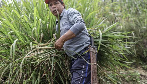 Castillo insistió en que nacionalizaría el gas de Camisea y que impulsaría una segunda reforma agraria. (Foto: EFE/Jorge López)