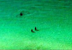 Captan a un tiburón acercándose a dos bañistas en Florida