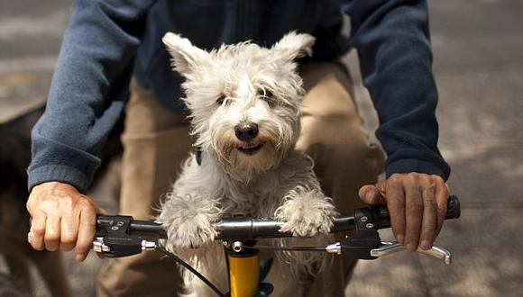 Experimentarán en perros una medicina para prolongar la vida