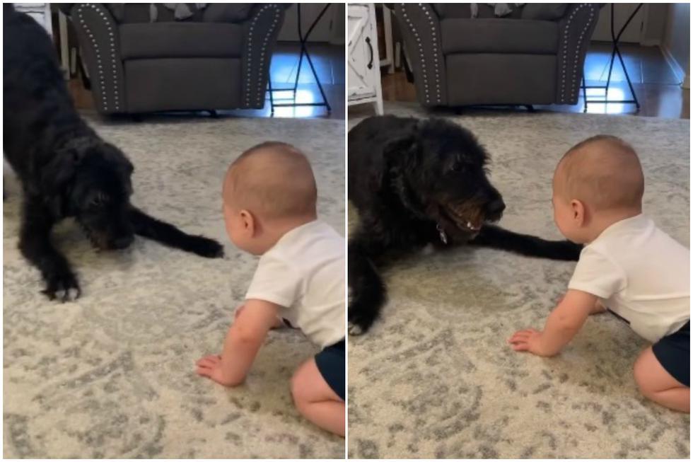 La mayoría de padres optaría por dejar a su bebé al cuidado de otra persona mayor en caso necesiten salir de casa. (Foto: Facebook/Angela Lally)