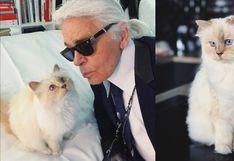 Día Internacional del Gato: conoce a Choupette Lagerfeld, la gata más rica del mundo | HISTORIA