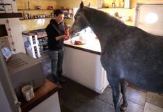 Una mujer vive con un caballo literalmente