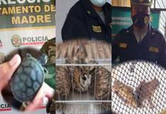 Rescatan animales silvestres que iban a ser vendidos en mercados ilegales de tres regiones