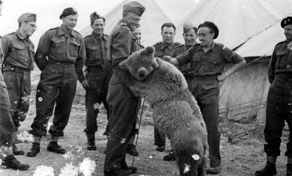"""""""Este oso pasó toda su vida entre hombres"""", cuenta Narebski, a quien llamaban """"el pequeño Wojtek"""", en oposición al oso, """"el gran Wojtek"""". (HANDOUT / THE POLISH INSTITUTE AND SIKORSKI MUSEUM - LONDON / AFP)"""