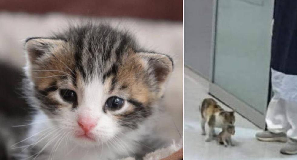 El pequeño bebé felino se encontraba mal y es por eso que su madre decidió llevarlo al hospital. (Pixabay / Facebook: @Jamushi7)