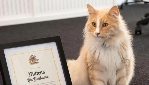Este es Mittens, el animal más famoso de la ciudad de Wellington. (Foto: Wellington City Council)