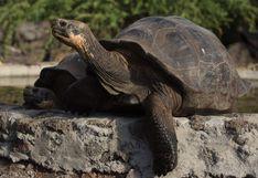Conductor pagará US$11,000 de multa por atropellar a una tortuga en Galápagos
