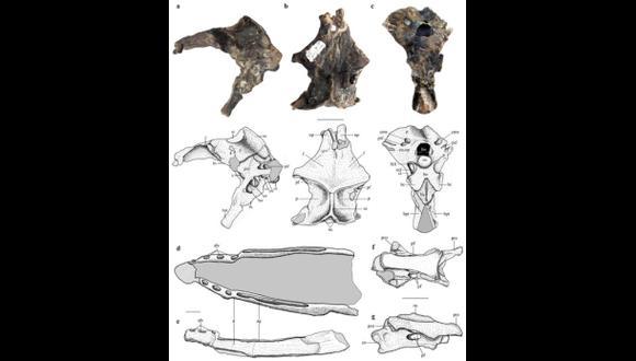 Hallan restos de un desconocido reptil volador del Jurásico