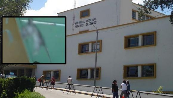 Encuentran una rata dentro de hospital de Arequipa
