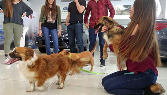 Amy, Bella, Sparky  y Pepa (fotos: Mauricio Vargas)
