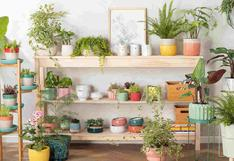 Primavera: ¿cómo cuidar nuestras plantas en esta temporada?