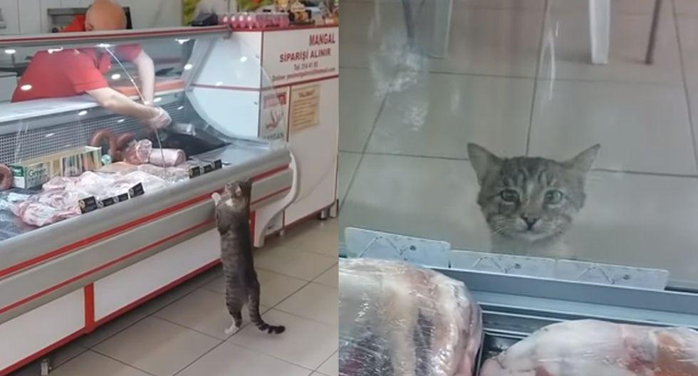 Así es como este carnicero le da de comer a un gatito que lo va a buscar todos los días para que lo alimente. (Foto: CATS)
