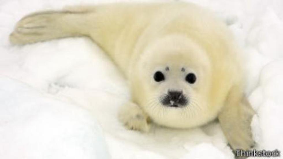 ¿Por qué nos enternecen tanto los bebes mamíferos? - 1