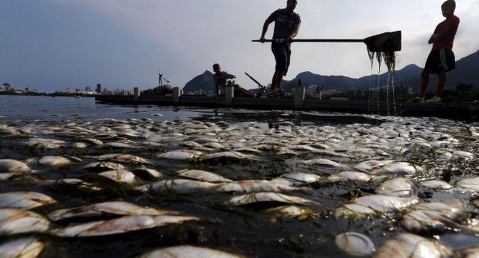Brasil: Retiran 32 toneladas de peces muertos de sede olímpica