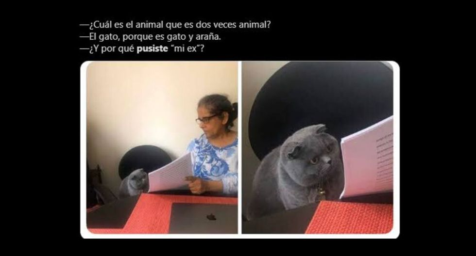 El meme del gato se puede usar para múltiples situaciones. (Captura)