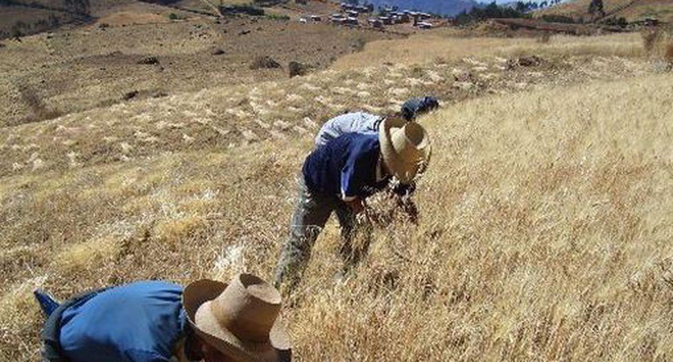 El plan busca beneficiar a 2,2 millones de pequeños productores. (Foto: Minagri)