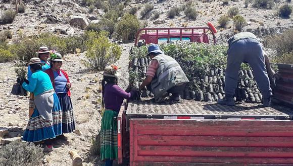 Ministerio de Agricultura plantea usar más de 4.000 plantones de quenual, especie nativa de la zona andina. (Foto: Andina)