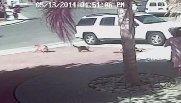 EE.UU.: Niño fue salvado por su gato del ataque de un perro