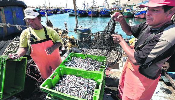 Solo se ha pescado el 22,6% de la cuota de anchoveta en el sur