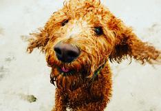 Mascotas: ¿se les debe recortar el pelo en verano?