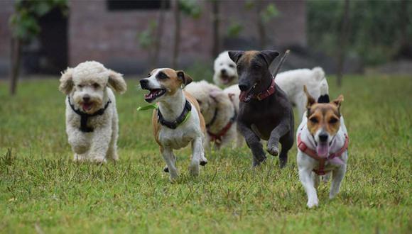 Cada mascota es diferente: por eso, es importante que encuentres un espacio acorde a las necesidades de tu perro. (Foto: archivo El Comercio)