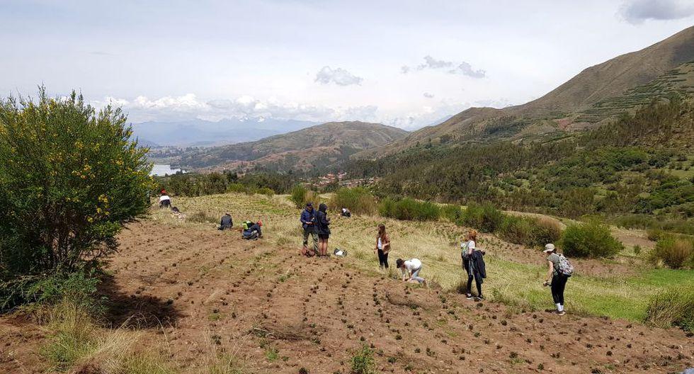 150 alumnos plantaron 13 mil árboles en cinco días.