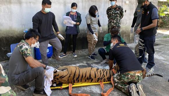 Una foto de un folleto facilitada por el Oficial de la Fuerza de Tarea de Operaciones Especiales Protegido para los Parques Nacionales y la Vida Silvestre (o unidad Phayasuae) muestra a los oficiales de vida silvestre tailandeses rescatar un tigre capturado después de una redada en un zoológico privado of Mukda Tiger Park & Farm en la provincia de Mukdahan, Tailandia. (EFE/PHAYASUAE UNIT).