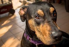 ¿Cómo prevenir una tragedia con tu mascota por intoxicación o envenenamiento?