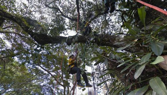 Google Maps ahora te lleva de tour por la Selva Amazónica