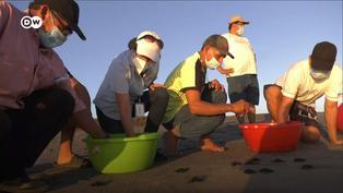 Ecología: Conoce el vivero de tortugas que tiene como meta un hermoso propósito