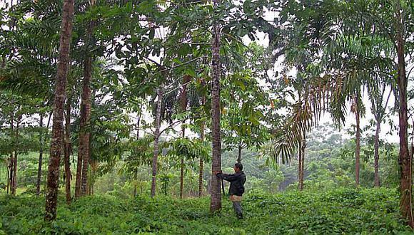 Loreto y Ucayali relanzarán concesiones forestales en el 2016